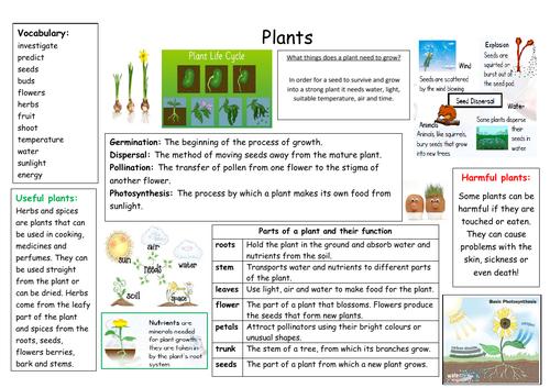 Plant topic Knowledge Organiser