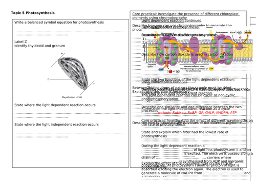 A level Biology Edexcel B Topic 5 Revision Mats