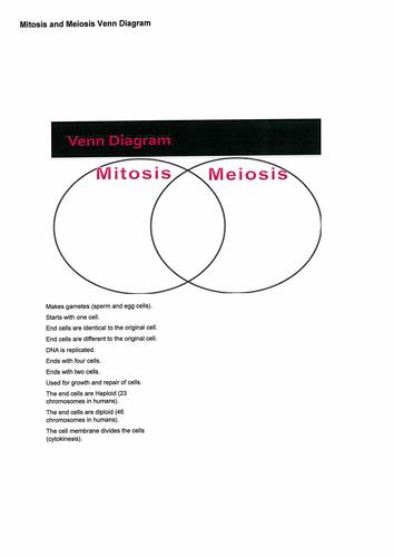 Mitosis Vs Meiosis Venn Diagram