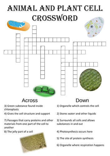 Biology Crossword Puzzle: Animal and plant cell structure