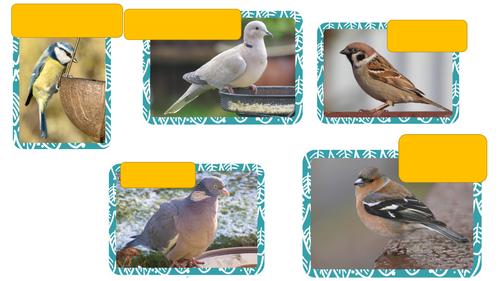KS3 DT Bird Box. Lesson 1.