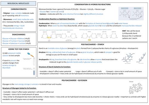 AQA A LEVEL BIOLOGY - Biological Molecules Revision