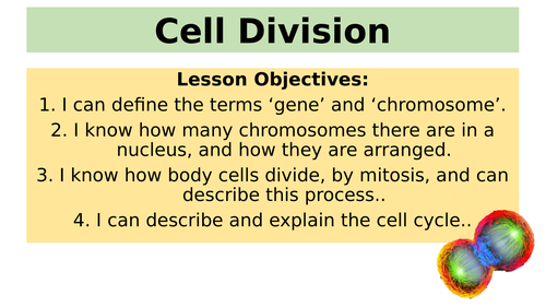 B2.1 Cell Division