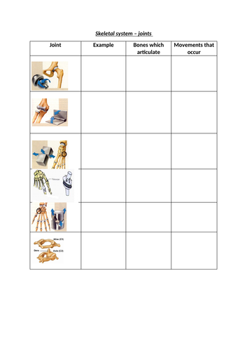 Synovial joints worksheet | Teaching Resources