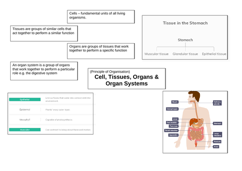 Biology Paper 1 Revision