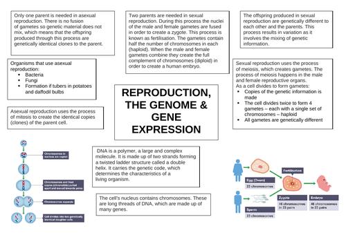 Biology Paper 2 (triple) Revision