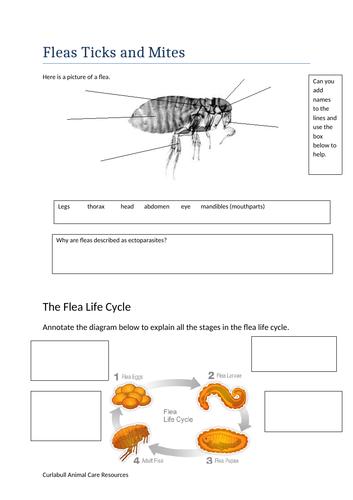 Ectoparasites - Fleas ticks and mites - workbook