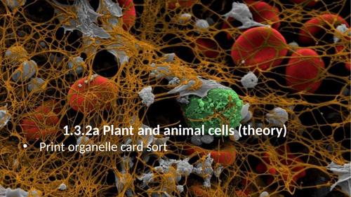1.3.2 Animal and plant cells (AQA 9-1 Synergy)