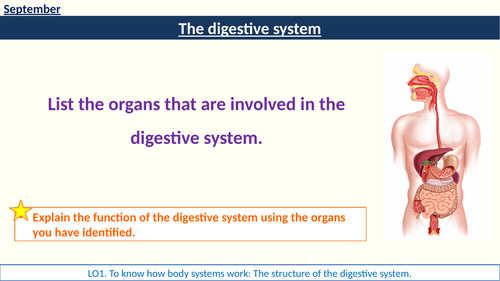 RO23 Body Systems Digestive System lessons HSC