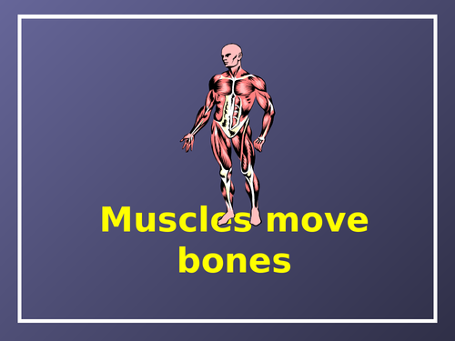 Muscles and Bones PowerPoint