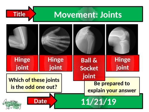 Movement : Joints - Activate