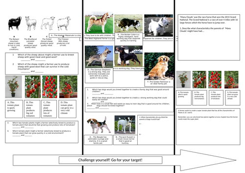 Differentiated Selective Breeding Activity