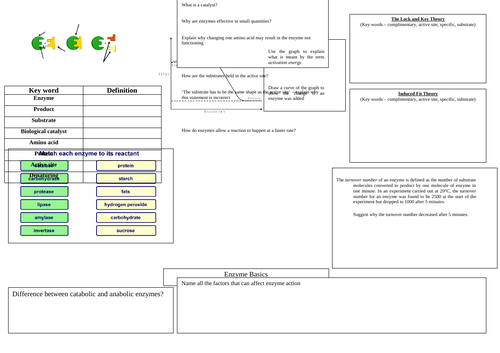 A Level Enzymes Revision Crib Sheet Differentiated