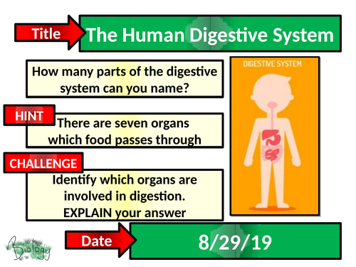 The Human Digestive System - Activate
