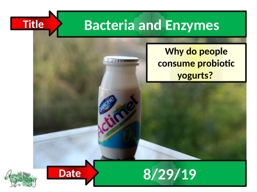 Bacteria and Enzymes in Digestion - Activate