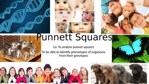 KS4/KS5 Punnet Squares and Inheritance