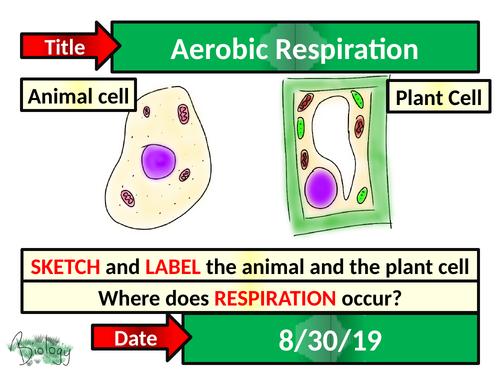 Aerobic Respiration - Activate