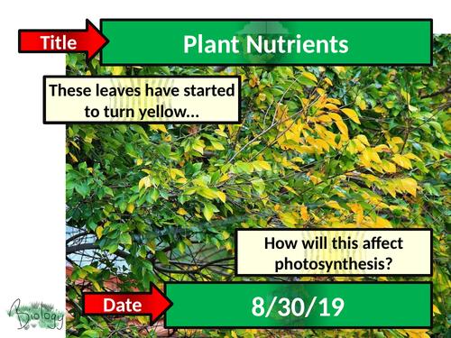 Plant Minerals and Deficiencies - Activate