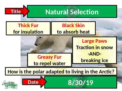Natural Selection  - Activate