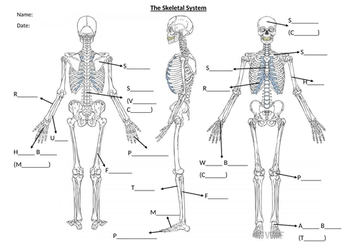 BTEC Unit 1 Anatomy and Physiology Skeletal Handout