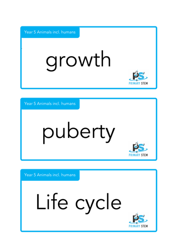 Year 5 Primary Science - Scientific Vocabulary Cards
