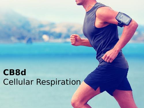 Edexcel CB8d Cellular Respiration