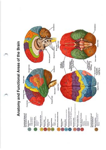 AQA AS Psychology: Biopsychology