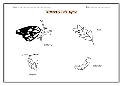 Butterfly and Moth Life Cycle