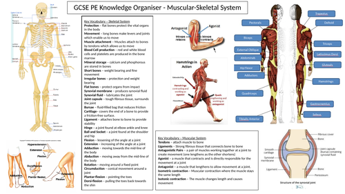 AQA GCSE PE revision sheets and practice questions