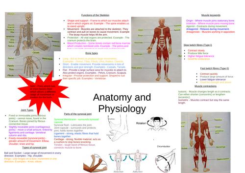 Cambridge IGCSE PE Knowledge Organiser - Anatomy and Physiology