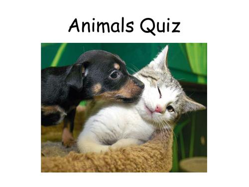 Animals Quiz