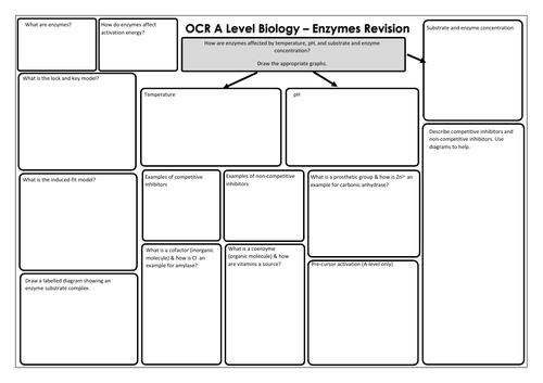 OCR A Level Biology - Enzymes Revision Mat
