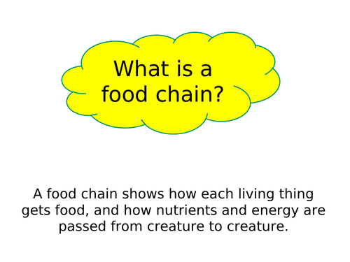 Food chains - producers, consumers and decomposers