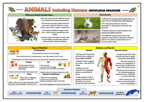 Year 3 Animals including Humans Knowledge Organiser!