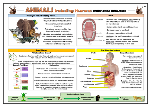 Year 4 Animals Including Humans Knowledge Organiser!