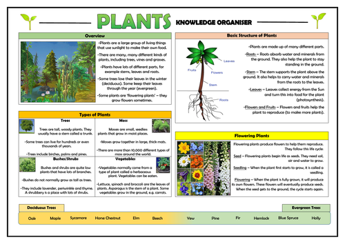 Year 1 Plants Knowledge Organiser!