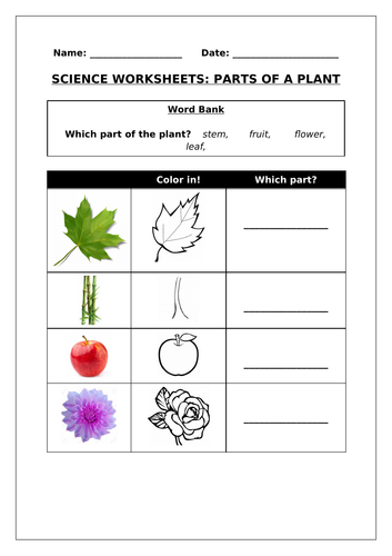 Science worksheets: Parts of a plant