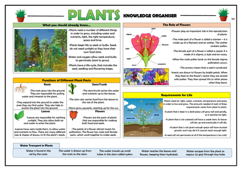 Year 3 Plants Knowledge Organiser!