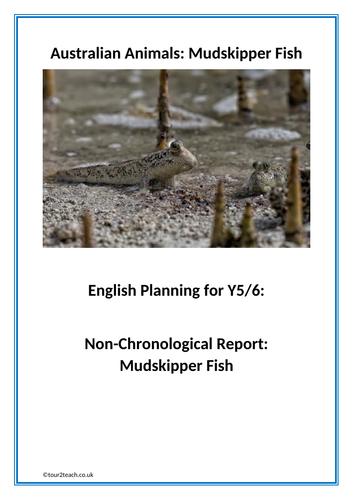 Non-chronological Report Planning: Year 5/6: Australian Animals : Mudskipper Fish