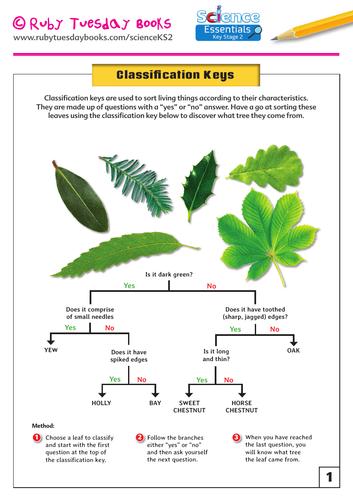 Leaf Classification Key