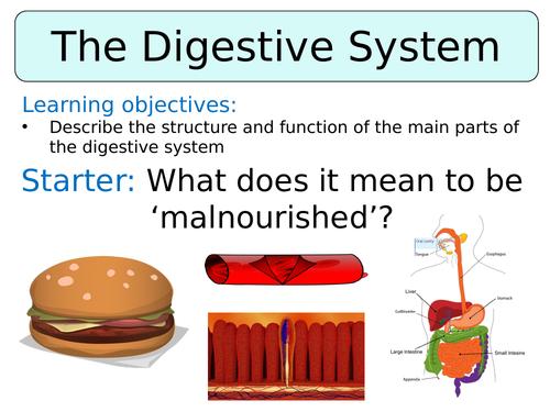 KS3 ~ Year 8 ~ Digestive System