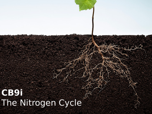 Edexcel CB9i The Nitrogen Cycle