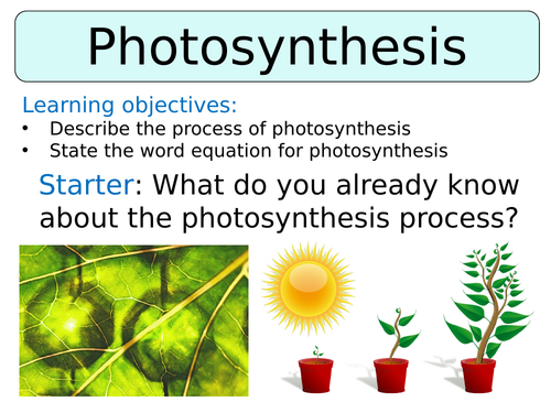 KS3 ~ Year 8 ~ Photosynthesis