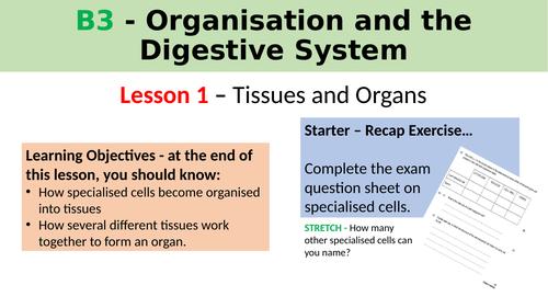 B3.1 Tissues and Organs