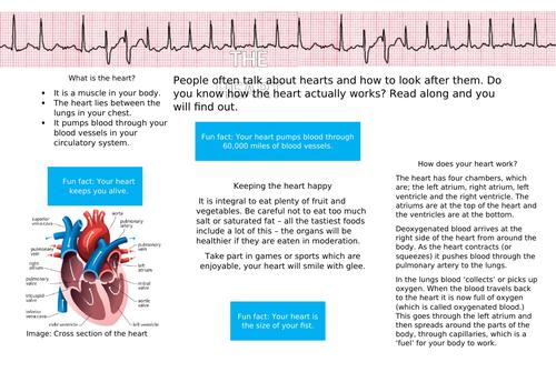 The Heart Non-Chronological report KS2