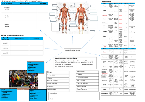 BTEC: Level 3 sport, Unit 1: A&P Revision spider diagrams