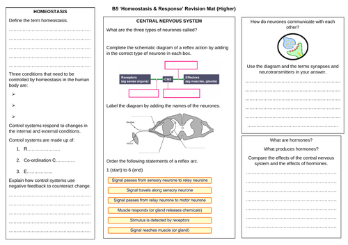 AQA Trilogy GCSE (2016 Onwards) Topic B5 'Homeostasis & Response' Higher Tier Revision Mat