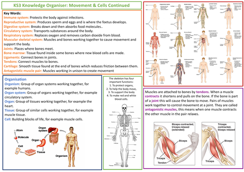 KS3 AQA Science Knowledge Organiser - Movement and Cells