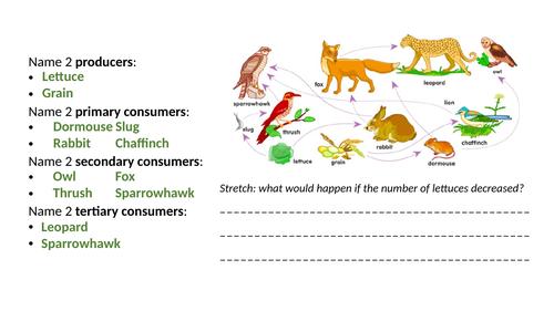 Predator Prey Cycles Worksheet & Resources