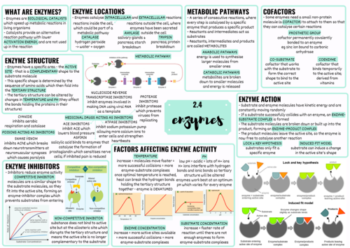 OCR A LEVEL BIOLOGY ENZYMES
